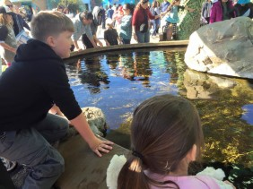 Sea World San Diego - A Life Lesson for Kids