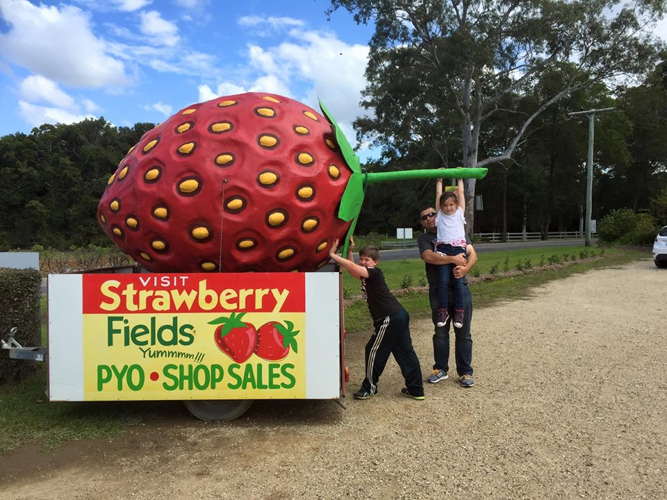 Strawberry Fields Farm : Pick Your Own Delights on the Sunshine Coast