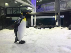 SEA LIFE Sydney Aquarium Penguin Expedition : An Immersive Ride-Through Adventure