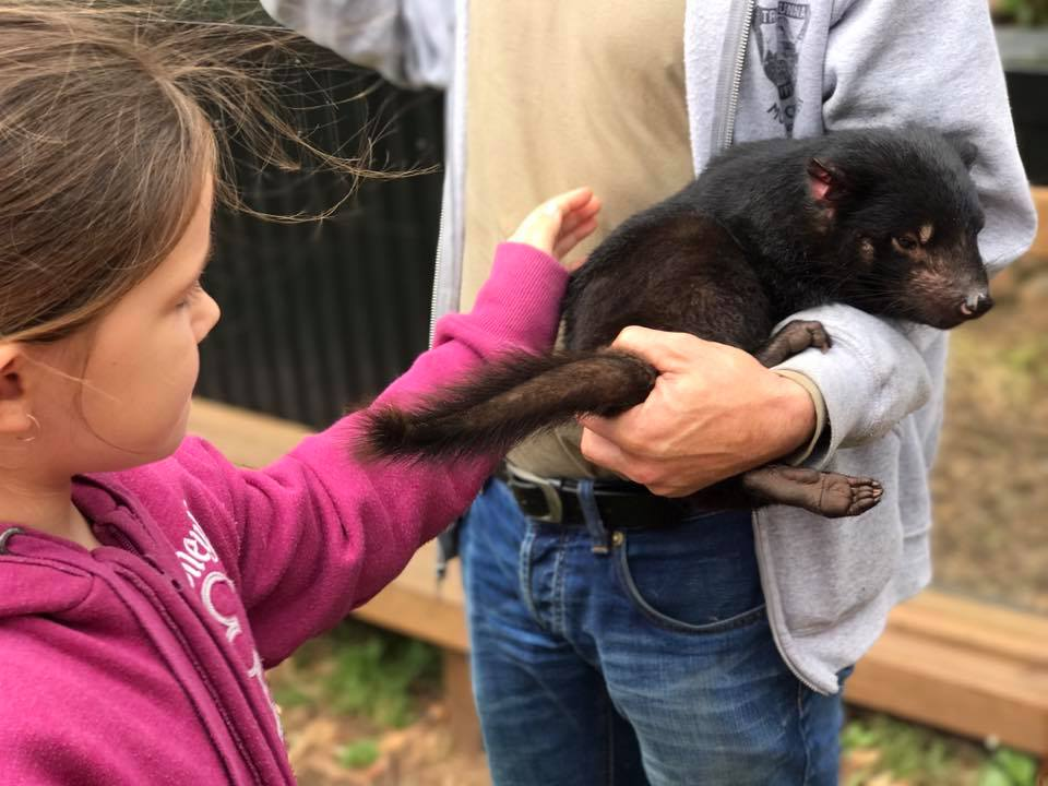Trowunna Wildlife Park : Up Close with A Tasmanian Devil