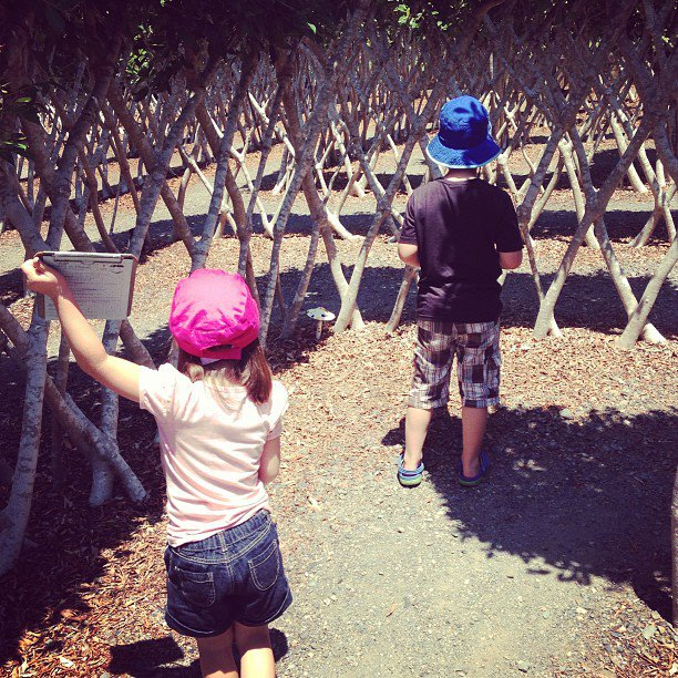 Get Lost in a Maze: Amaze 'n' Place in Alstonville NSW
