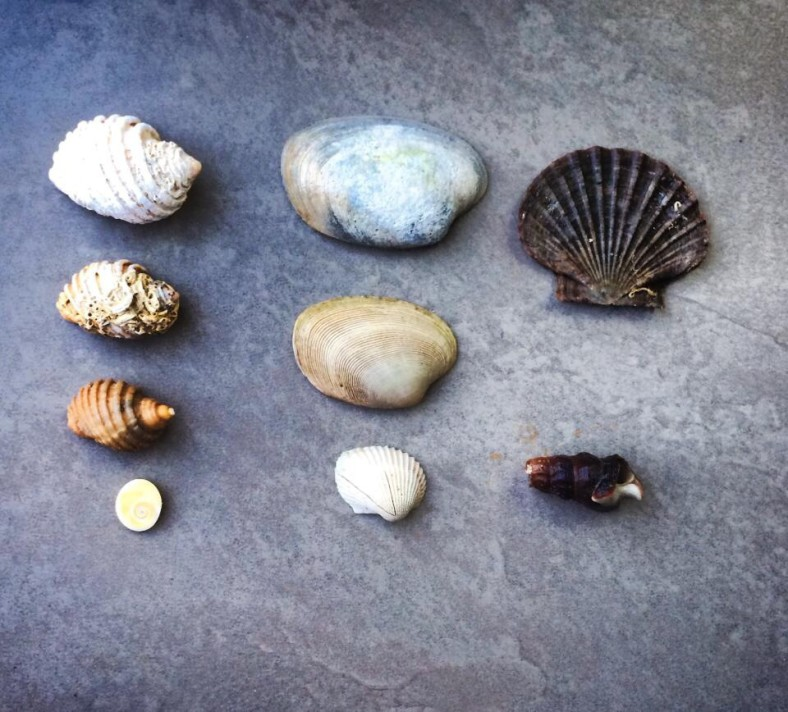 See how many different shells we can find at the beach