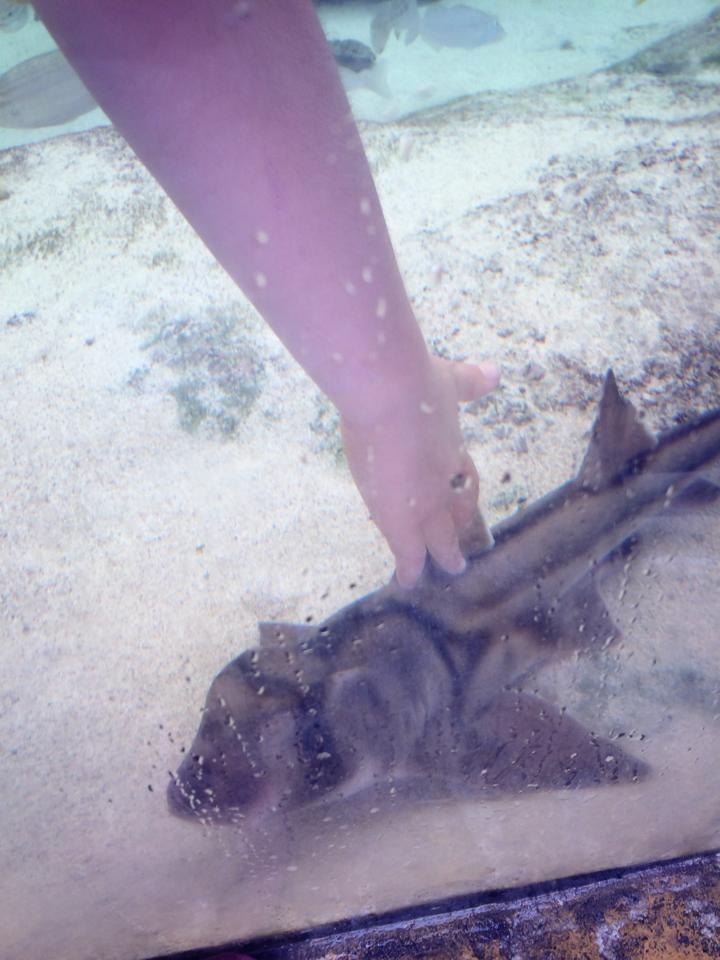 AQWA The Aquarium of Western Australia.4