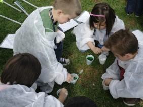 Citizen Science : School of Ants