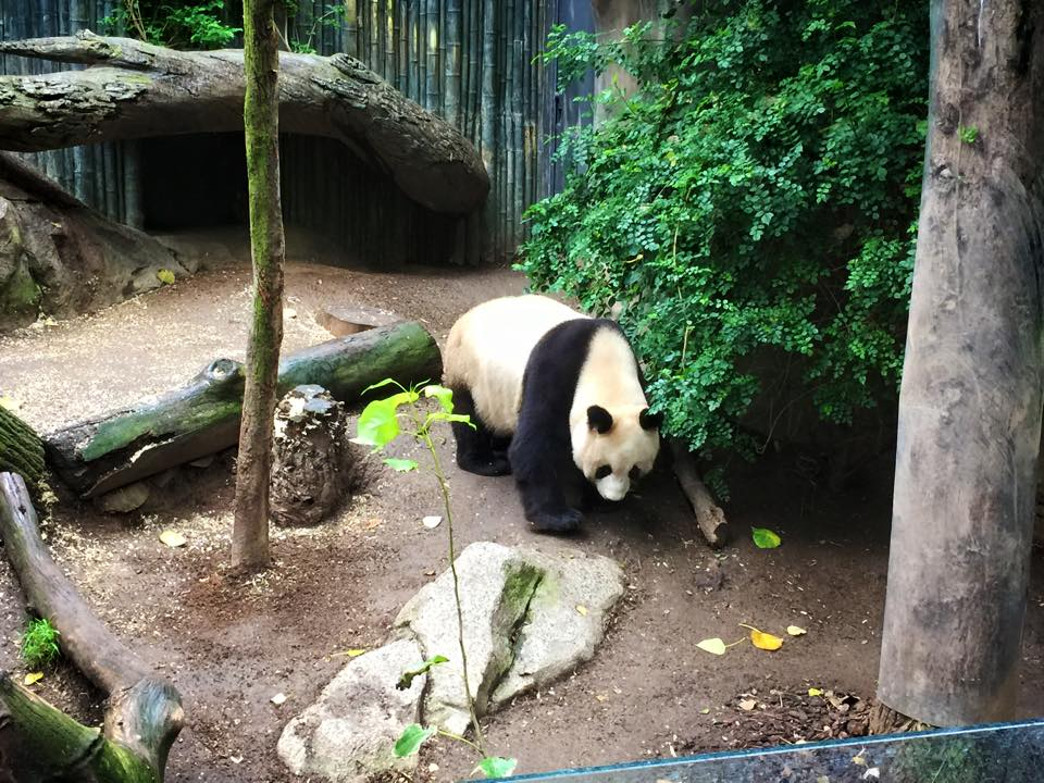 San Diego Zoo With Kids : A Wild Panda Adventure