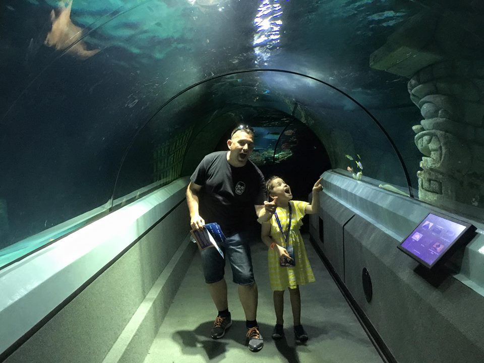 The Docket Diaries : Week 3 - Underwater World SEA LIFE Mooloolaba