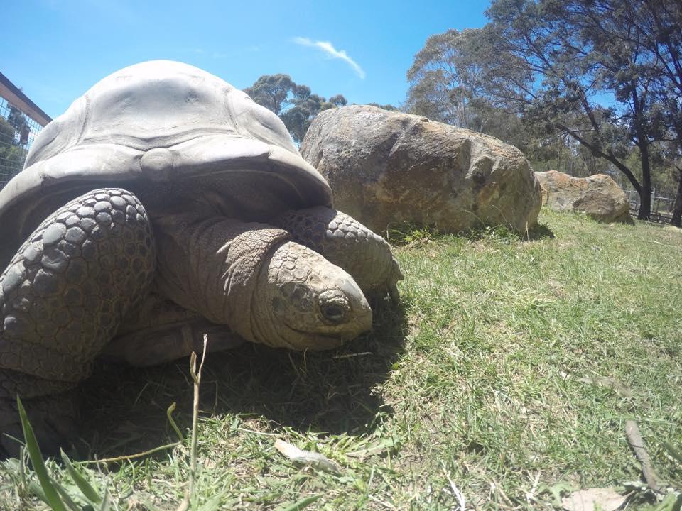 images ballarat wildlife - photo #31