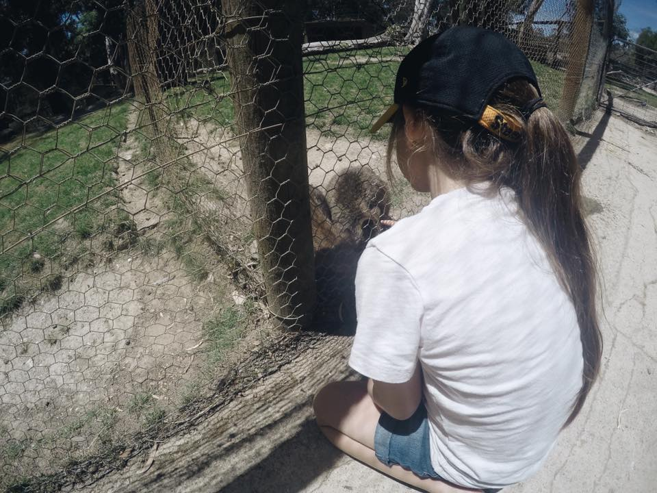 Ballarat Wildlife Park : Up Close With Australian Animals