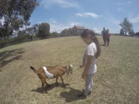 Collingwood Children's Farm : A Farm Adventure in the City!