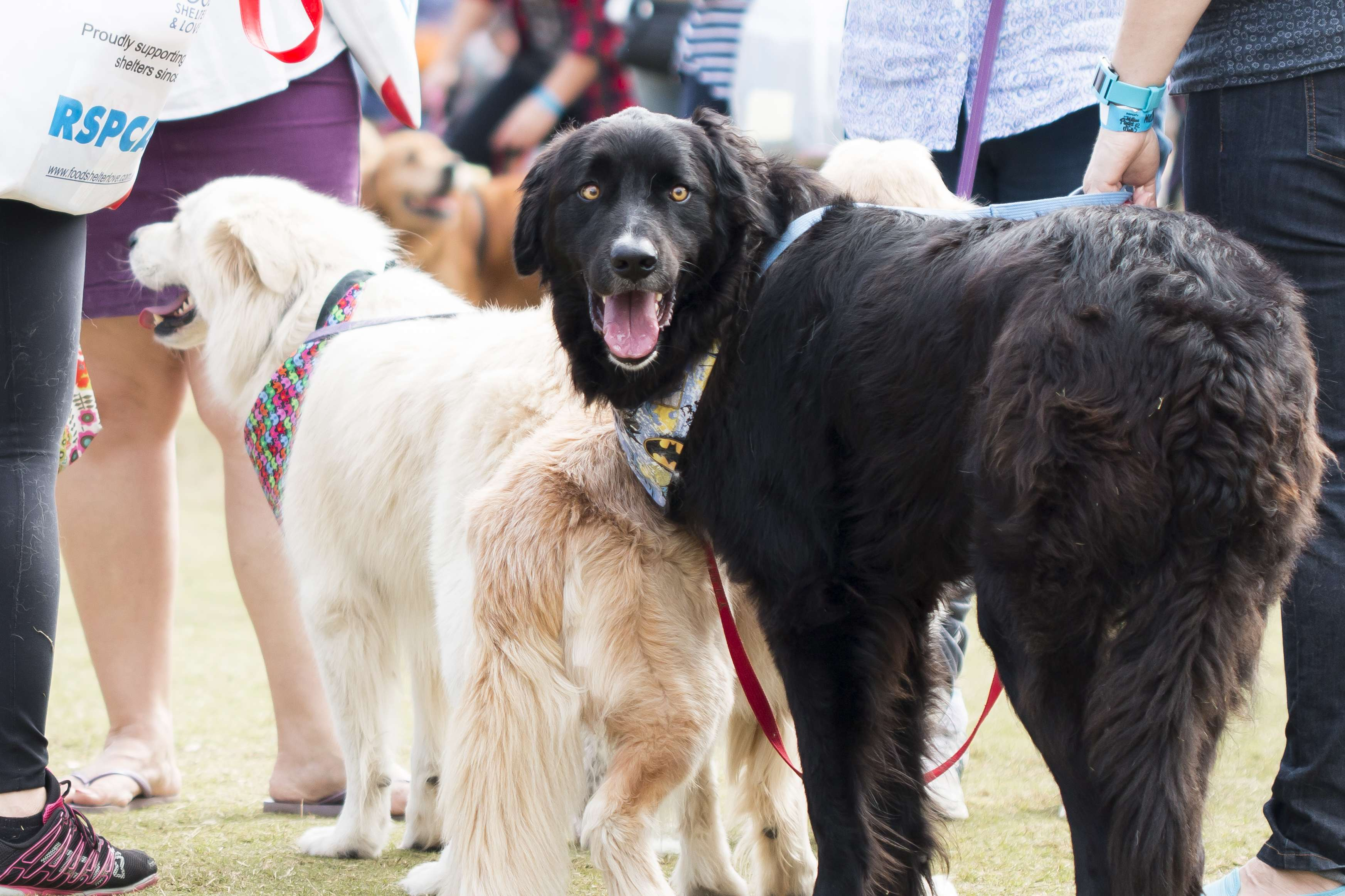 RSPCA Million Paws Walk : A Doggie Day Out - The Kid Bucket List