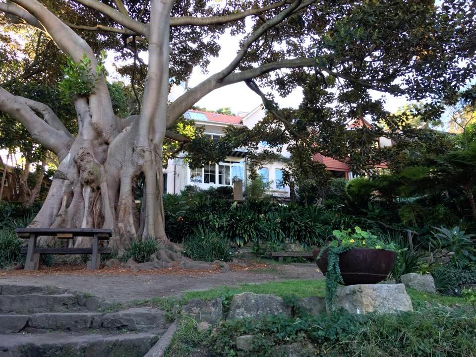 wendy u0026 39 s secret garden   uncovering hidden wonder in sydney