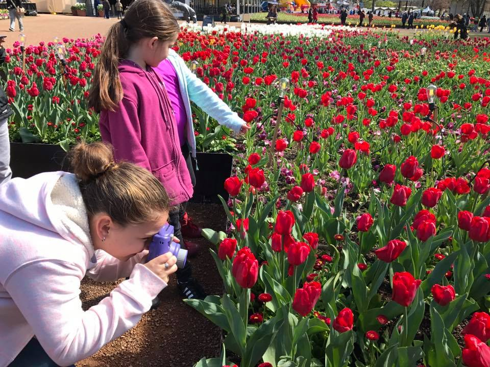 Floriade Canberra : More Than Just A Big Flower Festival