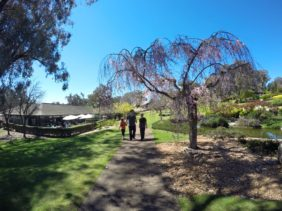 Cowra Japanese Gardens : Exploring Edo Japan In Australia