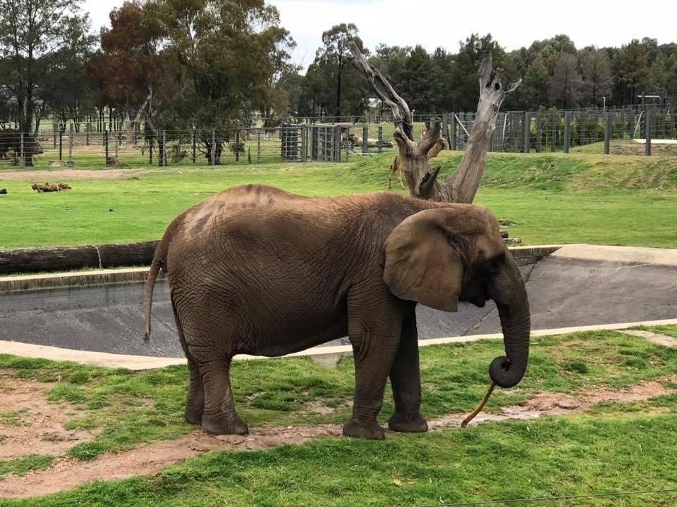 Taronga Western Plains Zoo Dubbo : A Rainy Day at the Zoo ...
