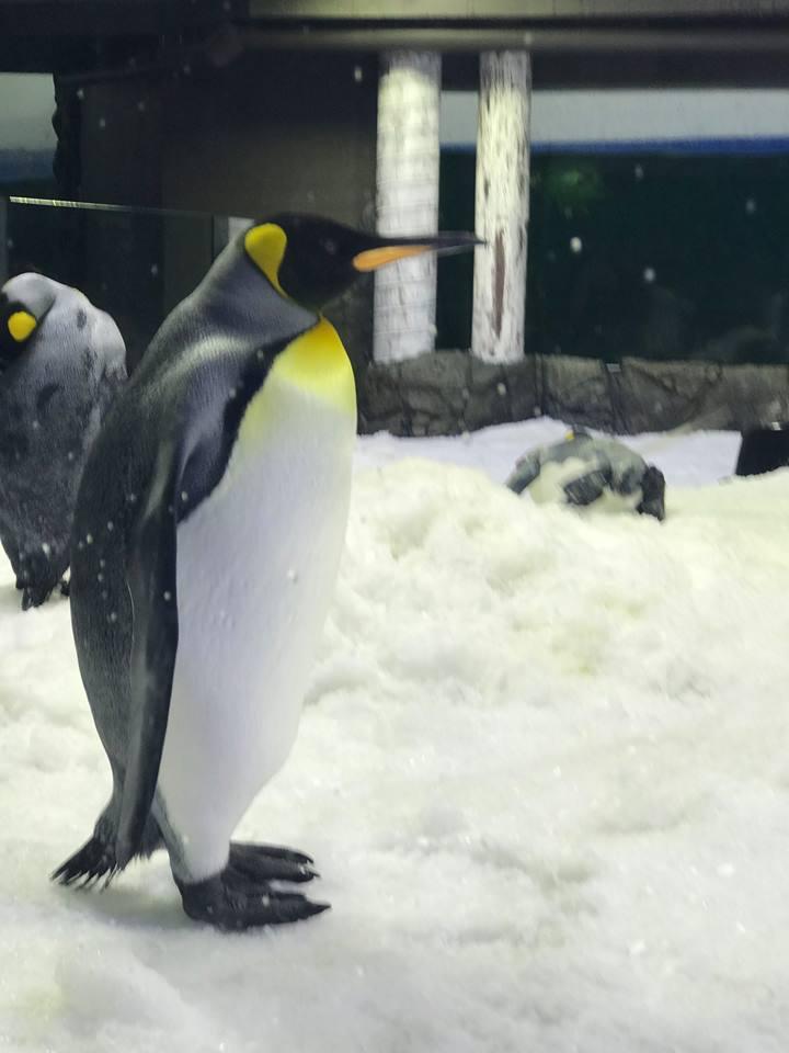 SEA LIFE Sydney Aquarium Penguin Expedition : An Immersive Ride-Through Adventure