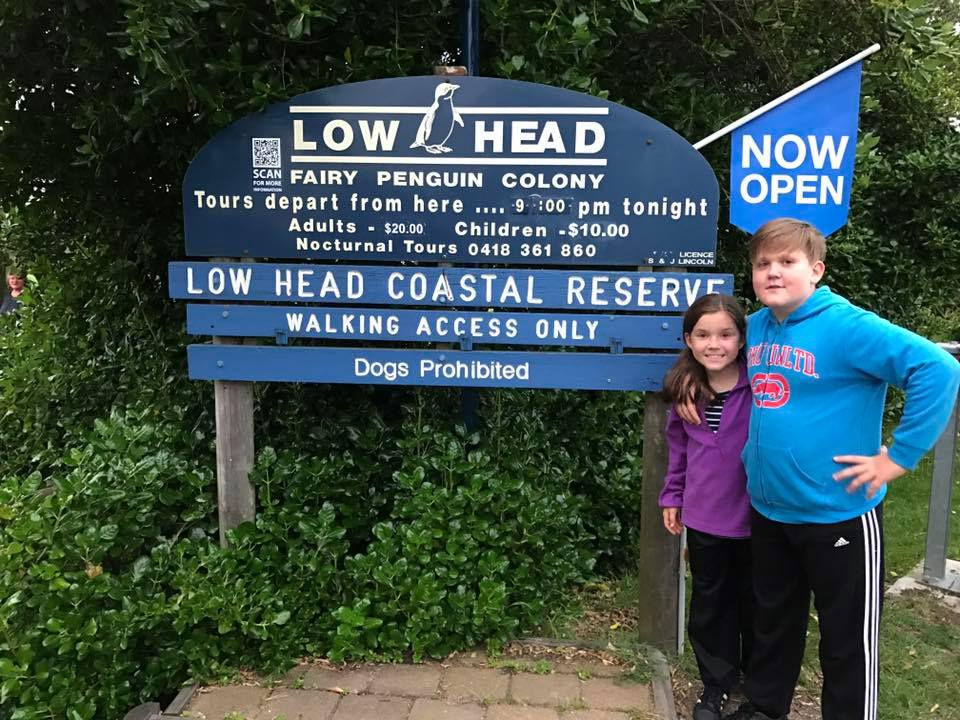 Low Head Penguin Tours With Kids