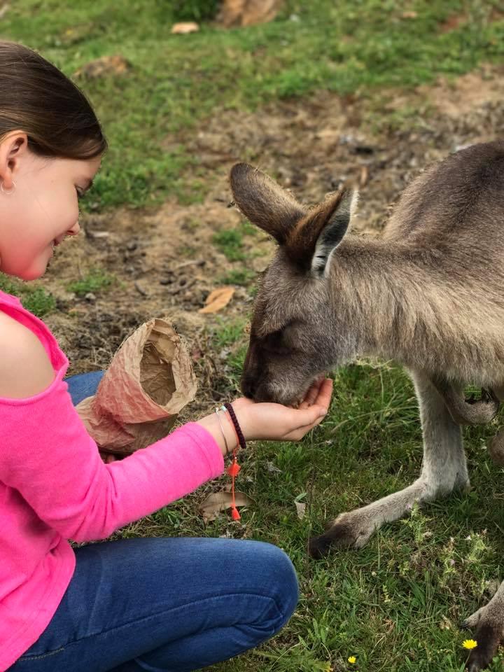 Trowunna Wildlife Park : Up Close with A Tasmanian Devil