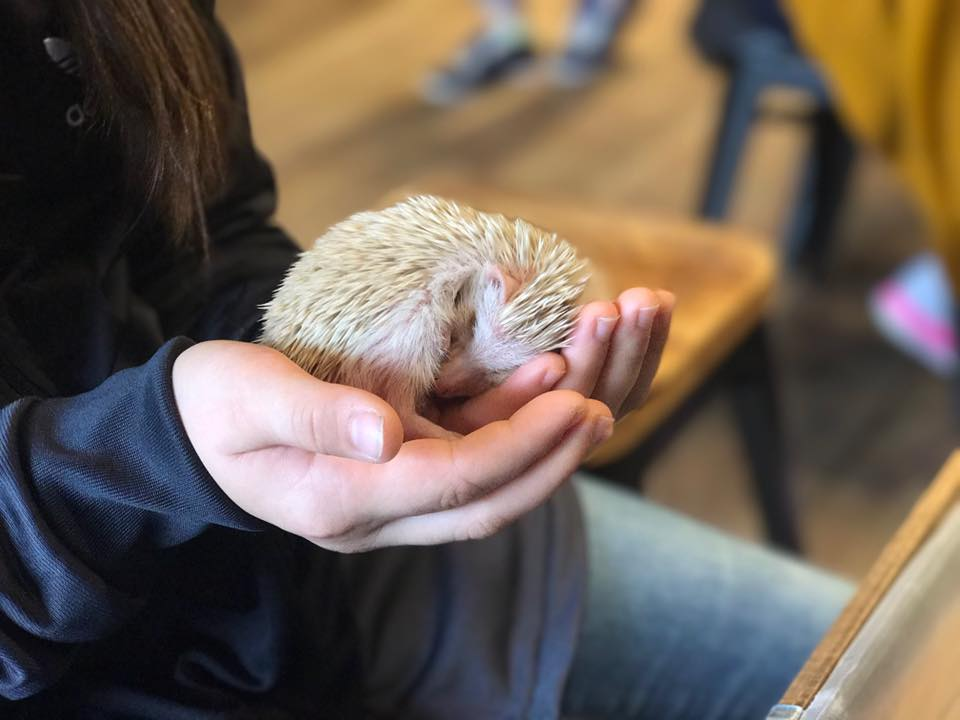 Harry Hedgehog Cafe Harajuku