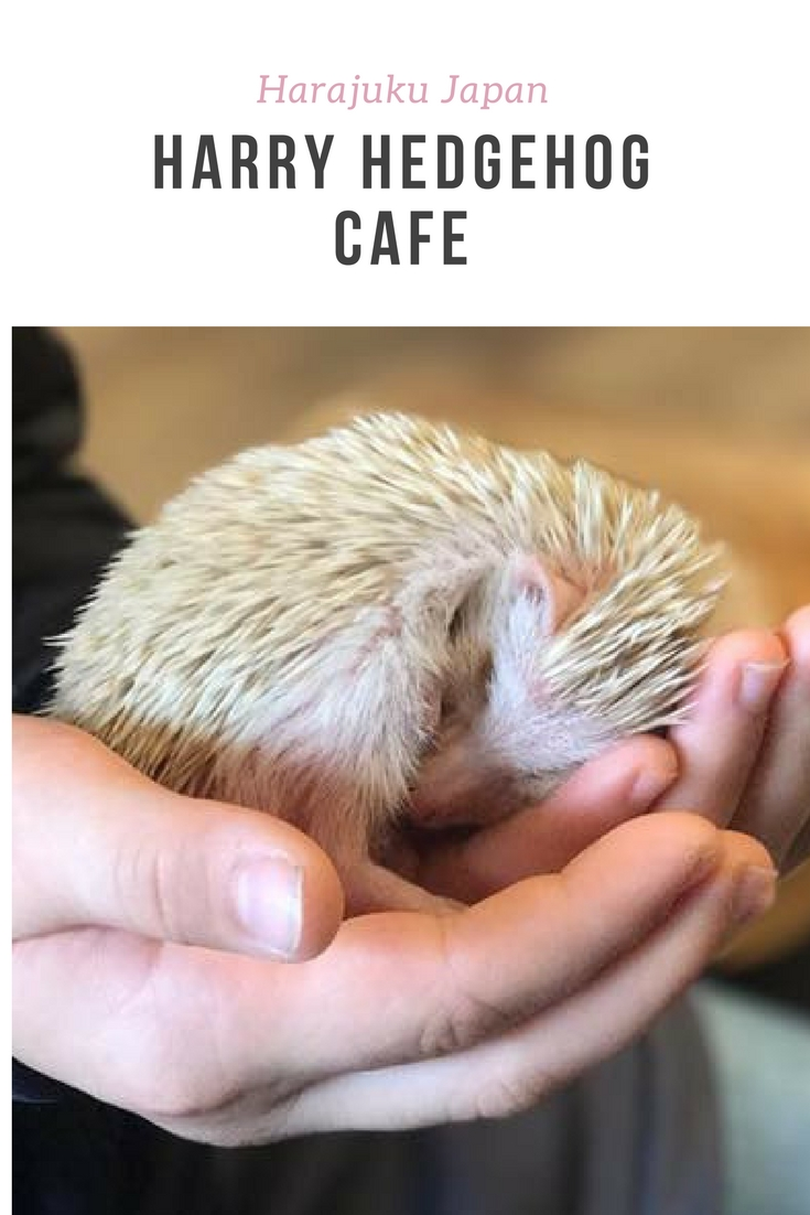 Harry Hedgehog Cafe Harajuku Japan