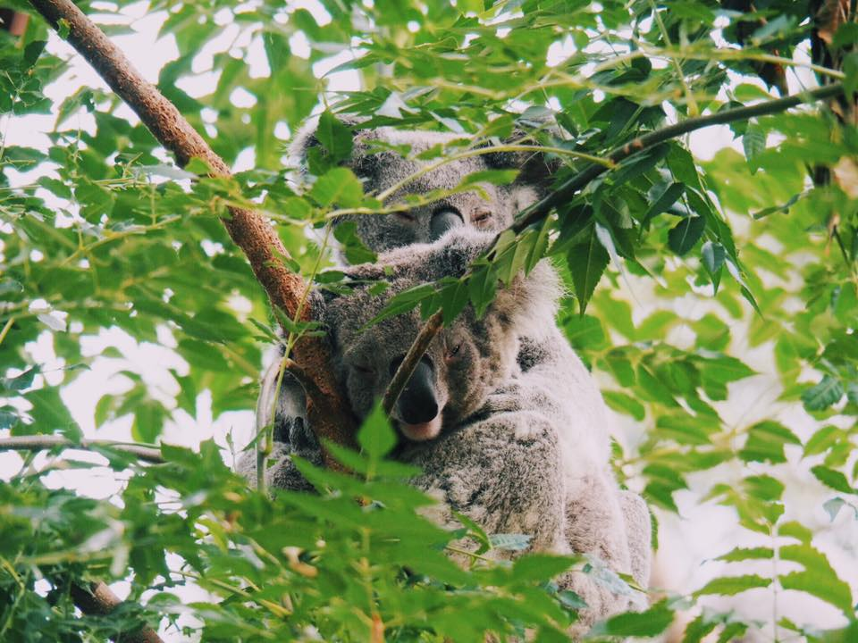 Featherdale Wildlife Park : A Private Animal Encounters Experience