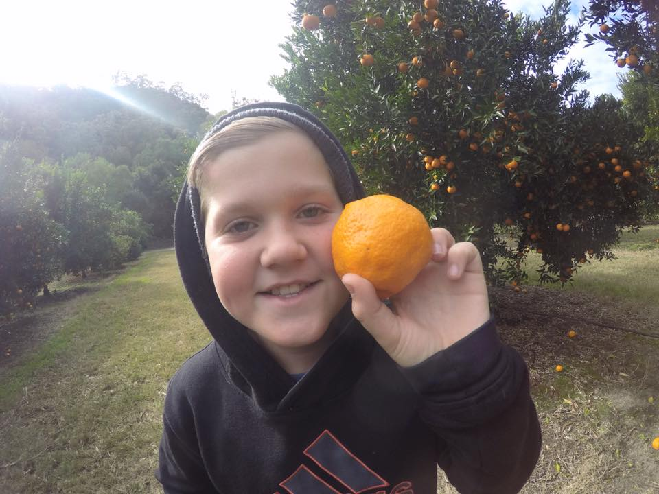 Fruit Picking With Kids : Where To Go Near Sydney
