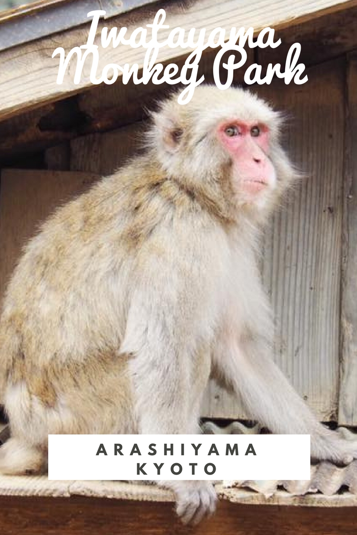 Iwatayama Monkey Park in Arashiyama Kyoto