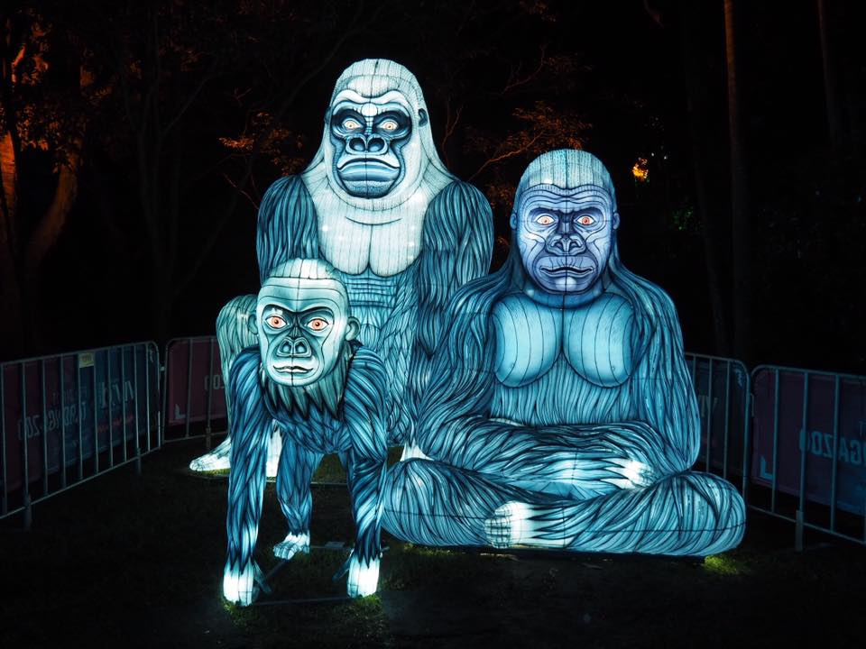 Vivid Sydney at Taronga Zoo