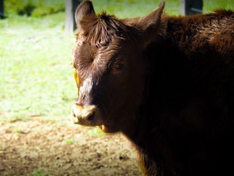 Farm Stays Near Sydney For a Family Getaway