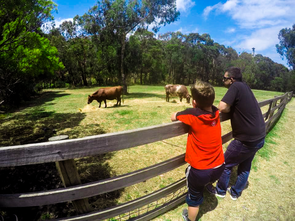 Farm Stays Near Sydney For a Family Getaway