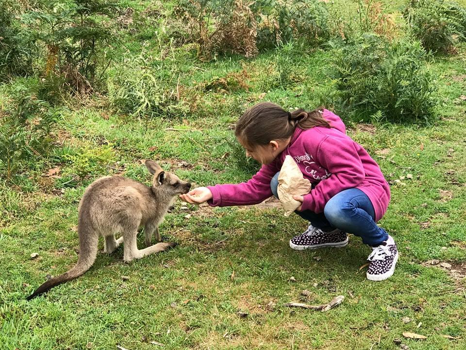 Trowunna Wildlife Park with kids