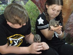 Sydney Animal Encounters : Experience Wildlife