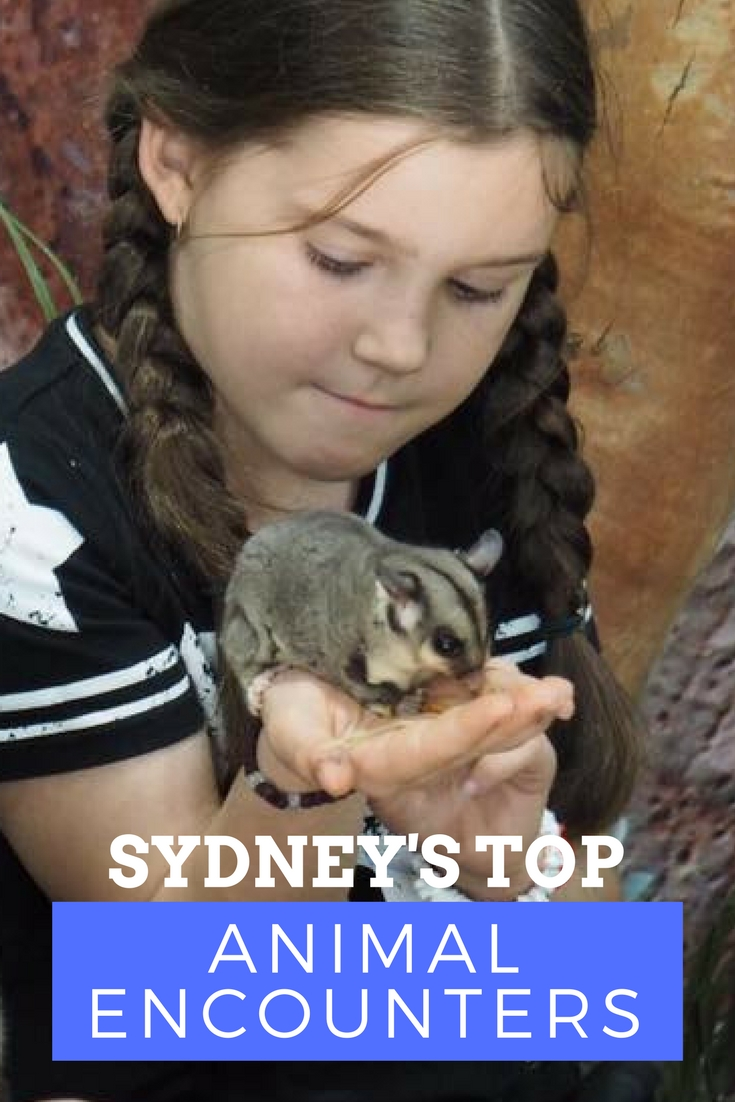 Sydney Animal Encounters : Experience Wildlife