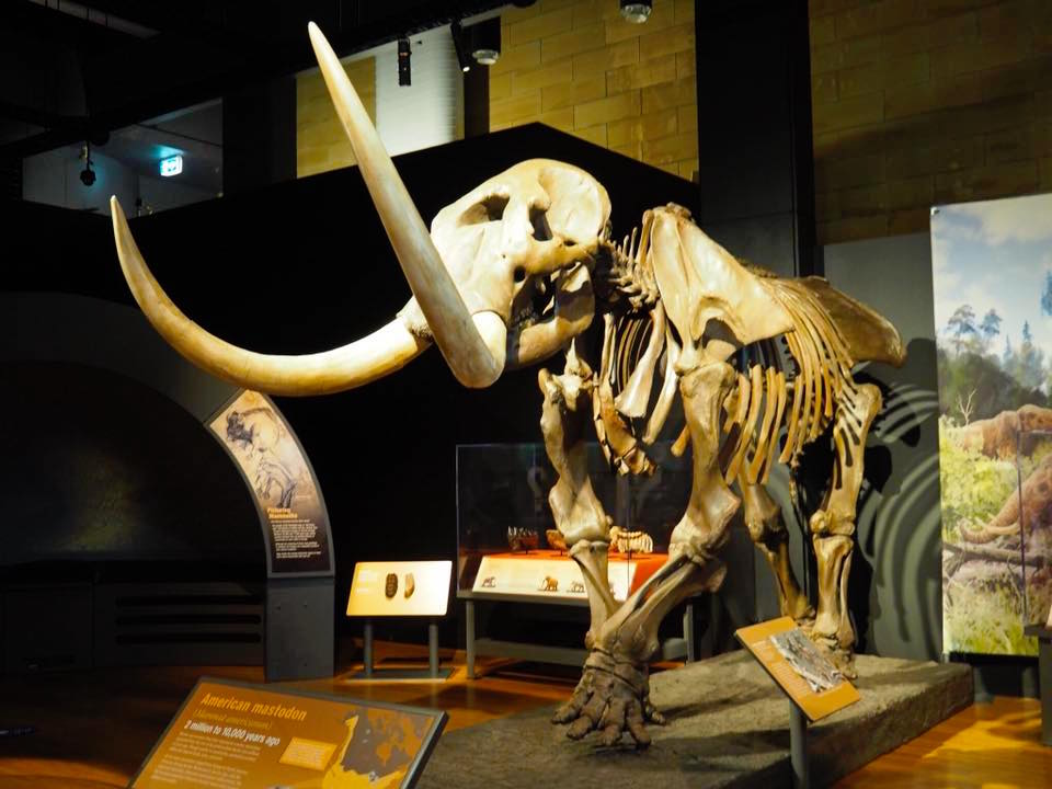 Australian Museum Welcomes Woolly Mammoth to Sydney