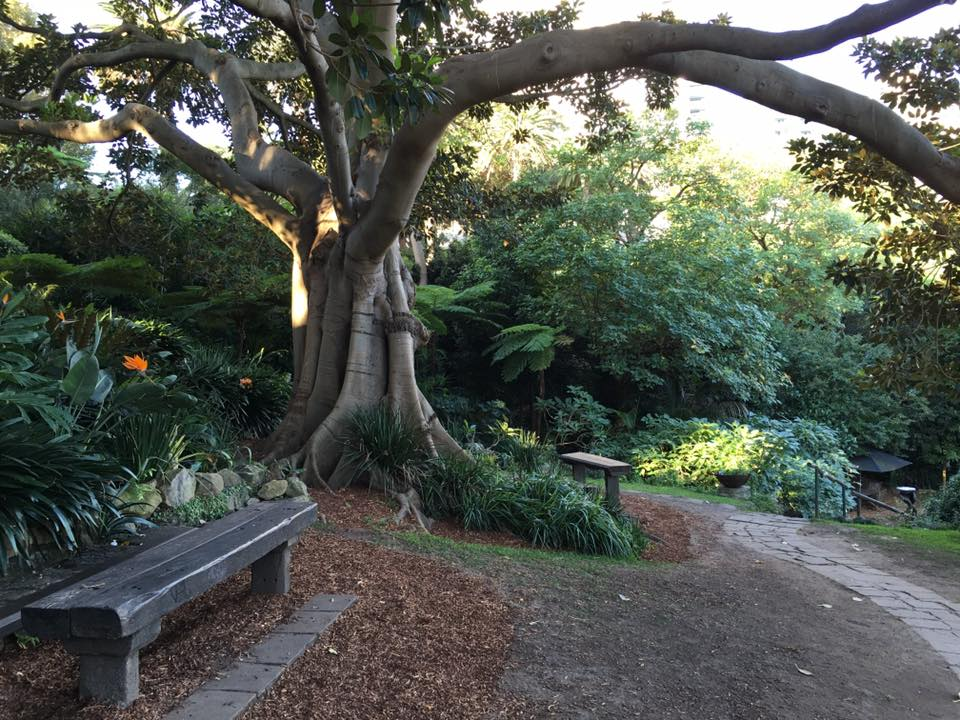 Things to do in Sydney with Kids Wendys secret garden